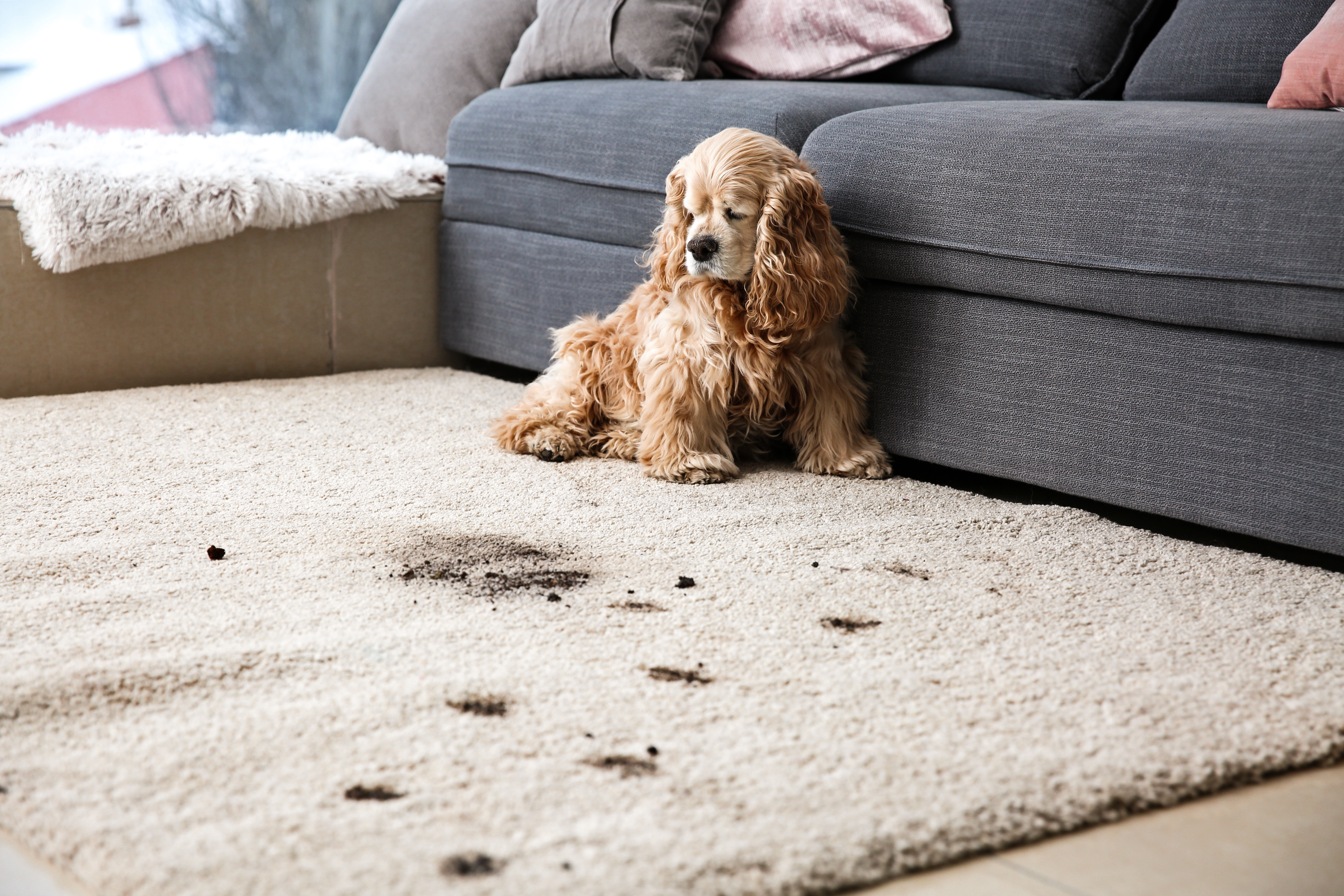 Cleaning carpets when you have pets or kids